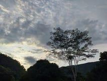 Coucher du soleil dans la jungle illustration libre de droits