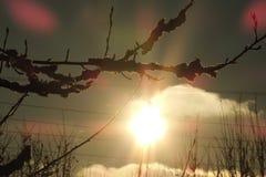 Coucher du soleil dans la perspective des arbres Image libre de droits