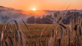 Coucher du soleil dans la région de Champagne Photo libre de droits