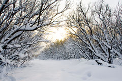 Coucher du soleil dans la ruelle de neige image stock