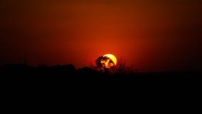 Coucher du soleil dans la savane près de Botshabelo, Mpumalanga, Afrique du Sud Images libres de droits
