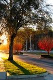 Coucher du soleil dans la ville, la route et les arbres Photographie stock