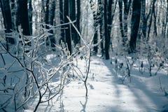 Coucher du soleil dans le bois entre les arbres en hiver Image stock