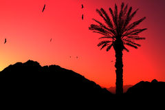 Coucher du soleil dans le désert de l'Egypte photos libres de droits