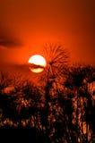 Coucher du soleil dans le delta d'Okavango photographie stock libre de droits