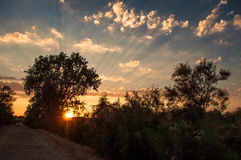 Coucher du soleil dans le delta de Danube Images libres de droits