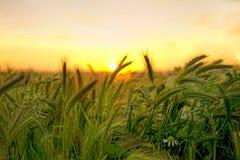 Coucher du soleil dans le domaine Images libres de droits