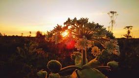 Coucher du soleil dans le domaine photo stock