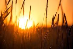 Coucher du soleil dans le domaine Images stock