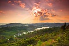 Coucher du soleil dans le domaine de thé photo libre de droits