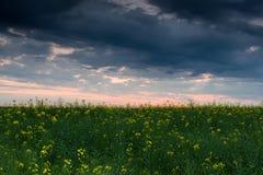 Coucher du soleil dans le domaine jaune de graine de colza Image stock