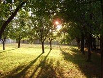 Coucher du soleil dans le jardin de fruit Photographie stock libre de droits