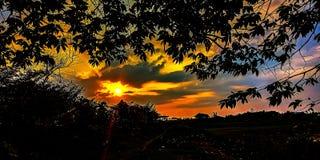 Coucher du soleil dans le marais photo libre de droits