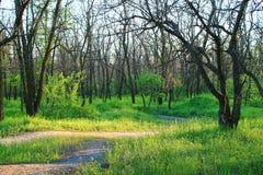 Coucher du soleil dans les bois Images libres de droits