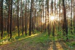 Coucher du soleil dans les bois Photographie stock libre de droits