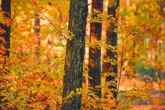Coucher du soleil dans les bois Photos stock