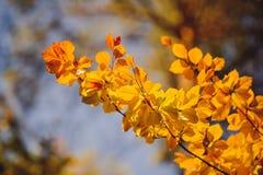 Coucher du soleil dans les bois Photos libres de droits