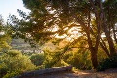 Coucher du soleil dans les branches d'arbre Beaux champs et collines d'islnad de Porquerolles photos stock