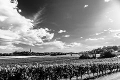 Coucher du soleil dans les vignobles de Friuli Venezia Giulia Photos libres de droits