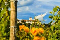 Coucher du soleil dans les vignobles de Rosazzo Image stock