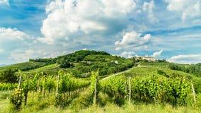 Coucher du soleil dans les vignobles de Rosazzo Photos libres de droits