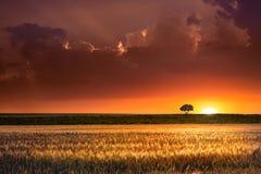 Coucher du soleil dans les zones agricoles image libre de droits