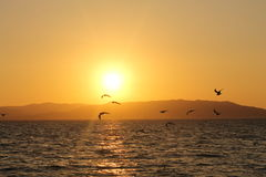 Coucher du soleil dans Paracas Image stock