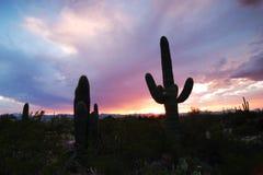 Coucher du soleil dans Tucson Image libre de droits