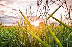 Coucher du soleil dans un domaine Photo stock