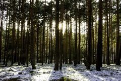 Coucher du soleil dans une forêt neigée photos libres de droits