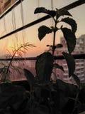 Coucher du soleil de balcon image libre de droits