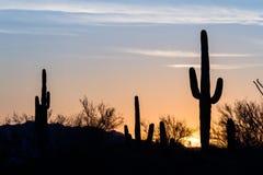 Coucher du soleil de cactus de Saguaro Images libres de droits