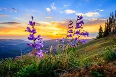Coucher du soleil de Cedar Breaks Image libre de droits