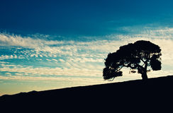 Coucher du soleil de chêne Photographie stock libre de droits