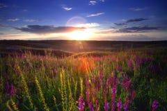 Coucher du soleil de champ Images libres de droits