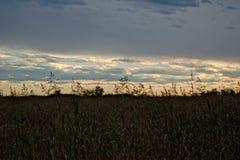 Coucher du soleil de champ Photo stock