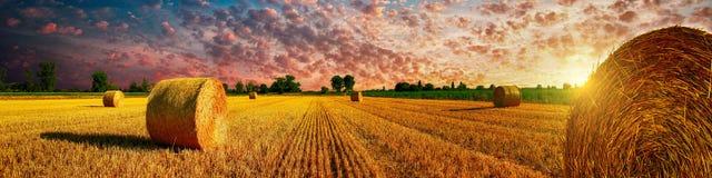 Coucher du soleil de champ de maïs Image libre de droits