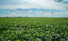 Coucher du soleil de champ de plantation de soja Photographie stock libre de droits