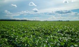 Coucher du soleil de champ de plantation de soja Image libre de droits