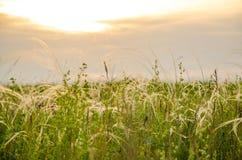 Coucher du soleil de cramoisi d'été Images stock