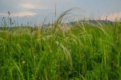 Coucher du soleil de cramoisi d'été Photo libre de droits