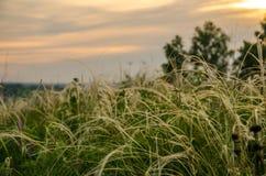 Coucher du soleil de cramoisi d'été Images libres de droits