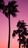 Coucher du soleil de désert Photo libre de droits