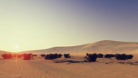 Coucher du soleil de désert Photographie stock