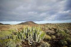 Coucher du soleil de désert de cactus dans les îles Canaries de Ténérife Photos libres de droits