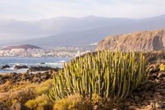 Coucher du soleil de désert de cactus dans les îles Canaries de Ténérife Photo libre de droits