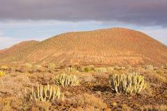 Coucher du soleil de désert de cactus dans les îles Canaries de Ténérife Photographie stock libre de droits