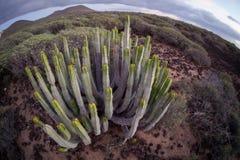 Coucher du soleil de désert de cactus dans les îles Canaries de Ténérife Images libres de droits