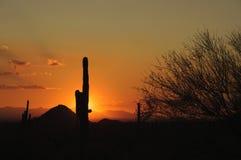 Coucher du soleil de désert de l'Arizona Senoran photos libres de droits