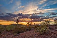 Coucher du soleil de désert de Sonoran Images libres de droits
